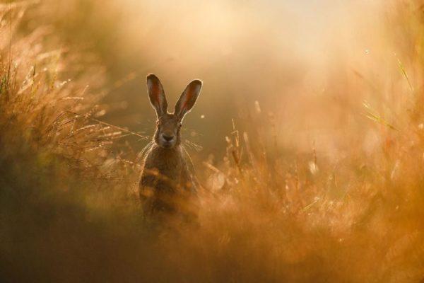 Confira as fotos vencedoras do The GDP Nature Photographer Of The Year 2020. O resultado é impressionante 2
