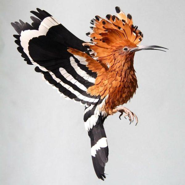 Diana Beltrán Herrera: artista colombiana usa papel para recriar espécies de aves em todo o mundo