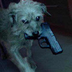 Dog Wick: chegou a hora da vingança sanguinária do cachorro de John Wick - Canal RocketJump