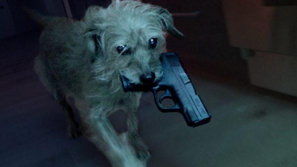 Dog Wick chegou a hora da vingança sanguinária do cachorro de John Wick