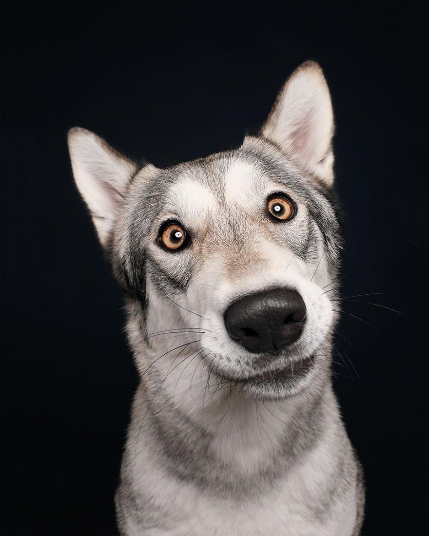 Elke Vogelsang fotógrafa de animais registrou cães adoráveis enquanto eles te observam 10