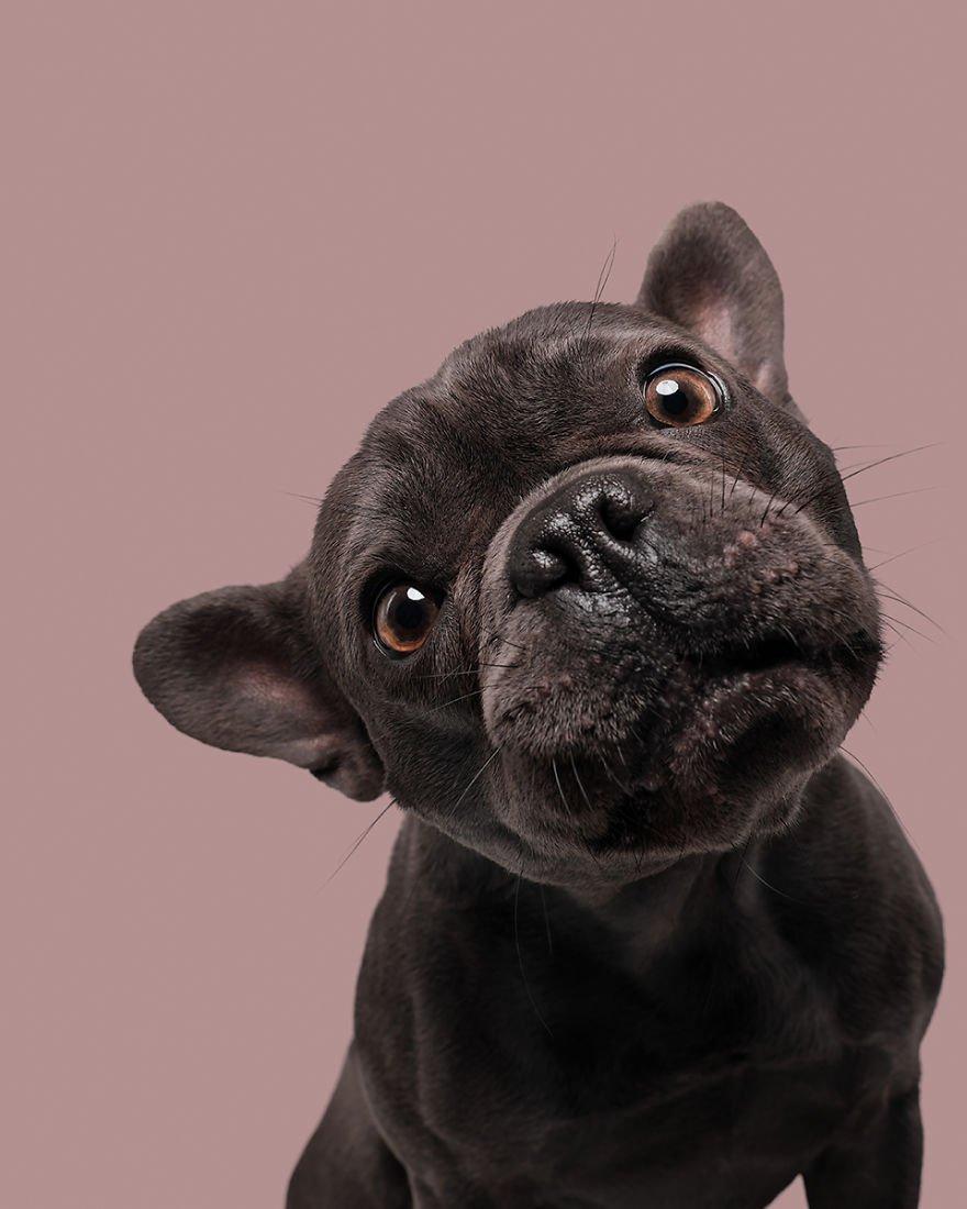Elke Vogelsang fotógrafa de animais registrou cães adoráveis enquanto eles te observam 13