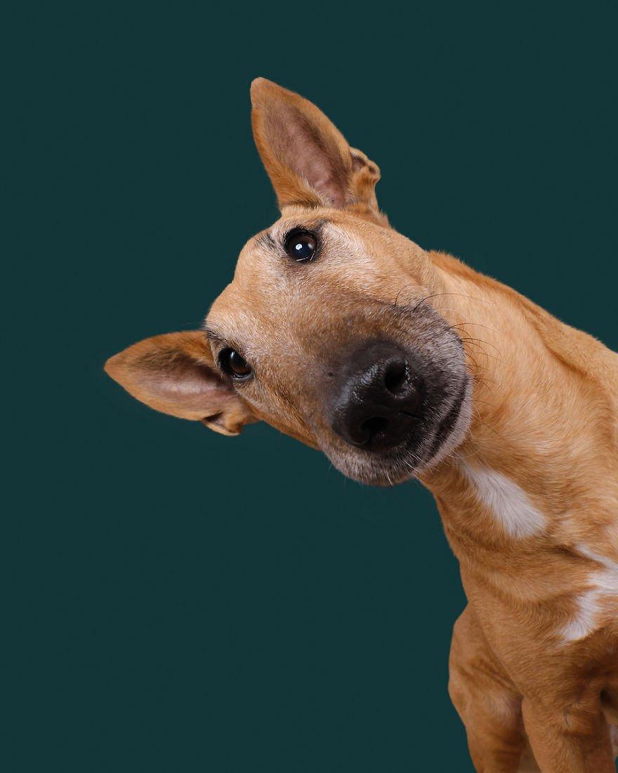 Elke Vogelsang fotógrafa de animais registrou cães adoráveis enquanto eles te observam 14