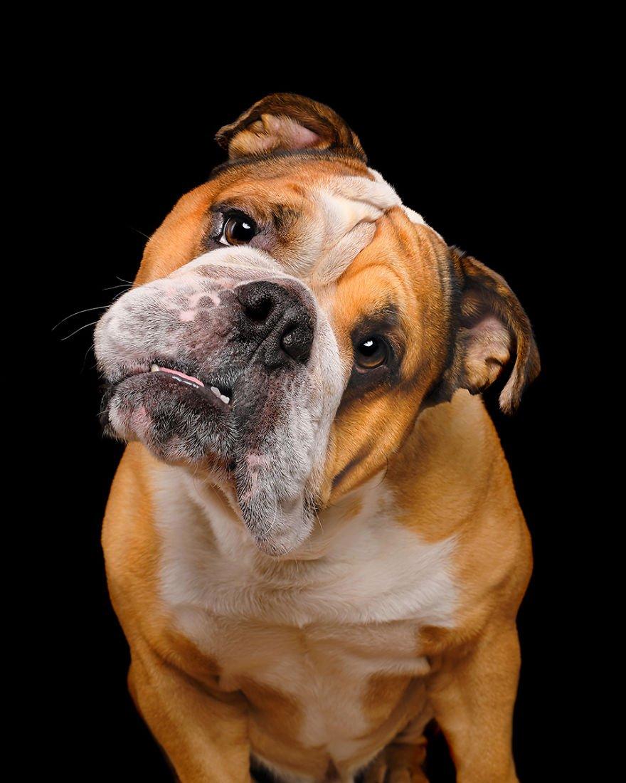 Elke Vogelsang fotógrafa de animais registrou cães adoráveis enquanto eles te observam 16