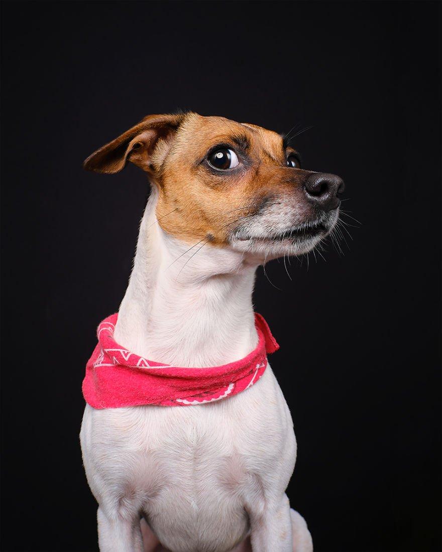 Elke Vogelsang fotógrafa de animais registrou cães adoráveis enquanto eles te observam 18