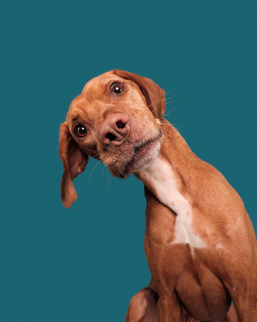 Elke Vogelsang fotógrafa de animais registrou cães adoráveis enquanto eles te observam 19