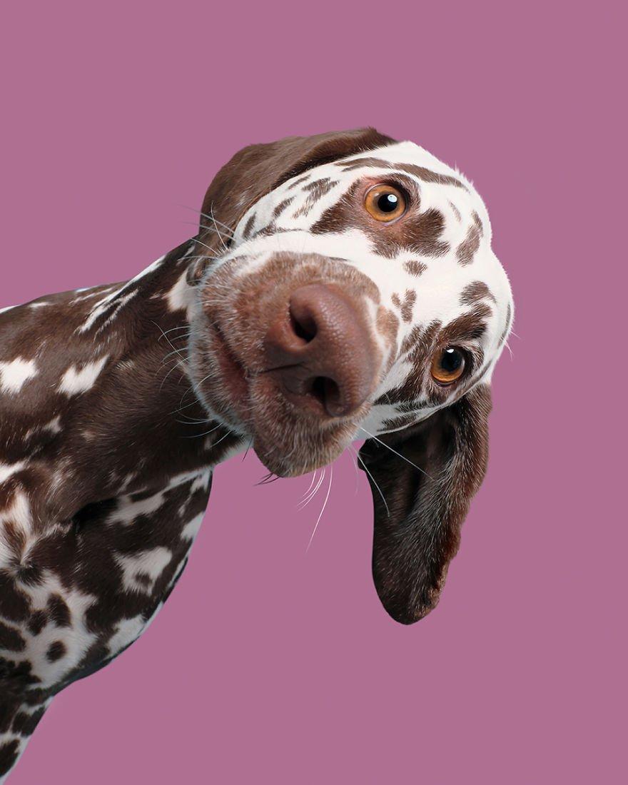 Elke Vogelsang fotógrafa de animais registrou cães adoráveis enquanto eles te observam 2