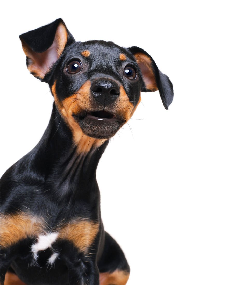 Elke Vogelsang fotógrafa de animais registrou cães adoráveis enquanto eles te observam 20