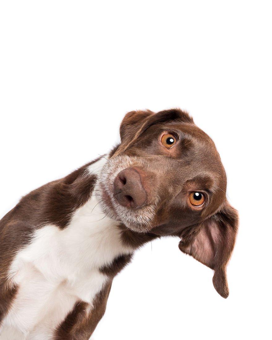 Elke Vogelsang fotógrafa de animais registrou cães adoráveis enquanto eles te observam 21