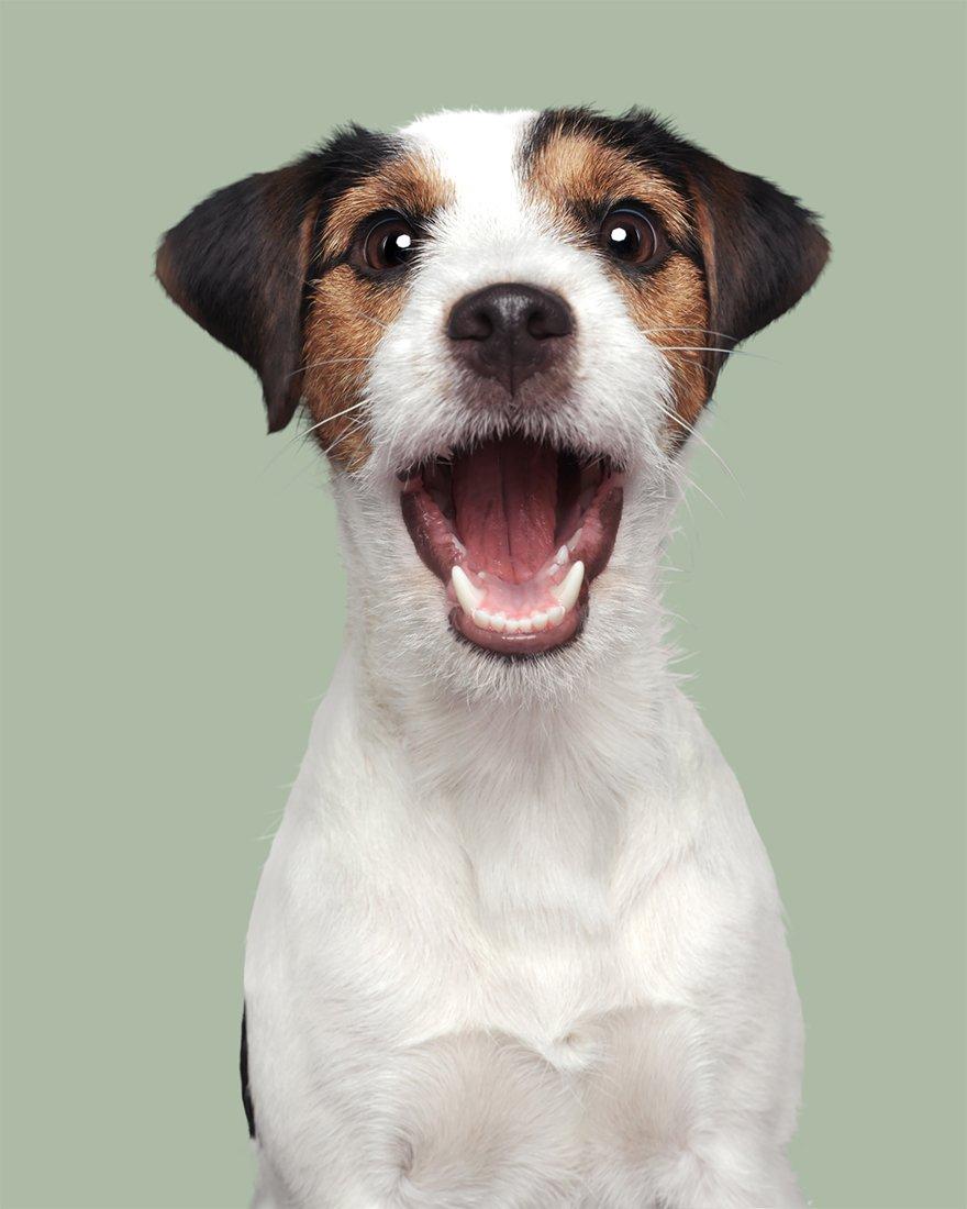 Elke Vogelsang fotógrafa de animais registrou cães adoráveis enquanto eles te observam 3