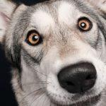 Elke Vogelsang fotógrafa de animais registrou cães adoráveis enquanto eles te observam 50