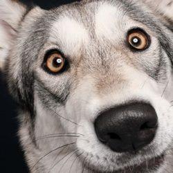Elke Vogelsang: fotógrafa de animais registra cães adoráveis enquanto eles observam a câmera