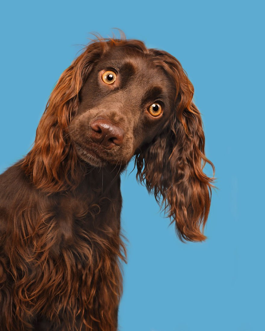 Elke Vogelsang fotógrafa de animais registrou cães adoráveis enquanto eles te observam 6