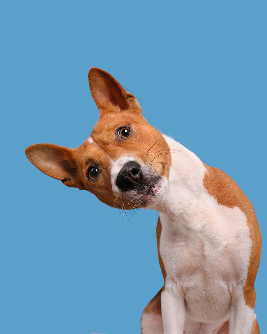 Elke Vogelsang fotógrafa de animais registrou cães adoráveis enquanto eles te observam 7