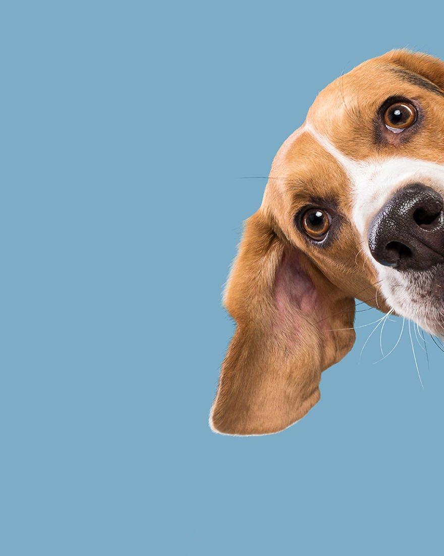Elke Vogelsang fotógrafa de animais registrou cães adoráveis enquanto eles te observam 8