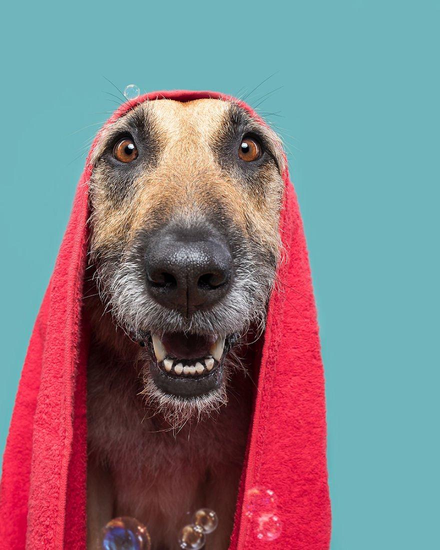 Elke Vogelsang fotógrafa de animais registrou cães adoráveis enquanto eles te observam 9