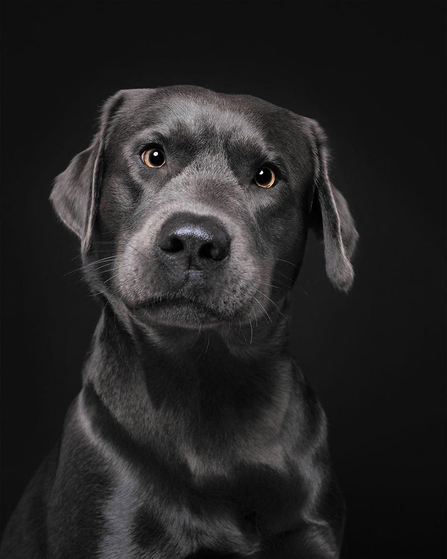 Elke Vogelsang fotógrafa de animais registrou cães adoráveis enquanto eles te observam