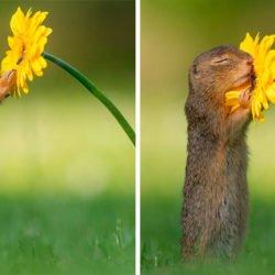 O que acontece na natureza quando ninguém está vendo