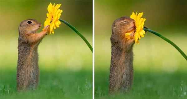 O que acontece na natureza quando ninguem está vendo 1