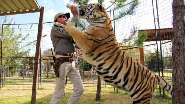 mafia dos tigres 2