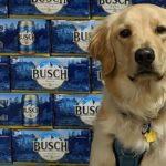 Anheuser Busch InBev cervejaria deu cerveja de graca para quem adotasse um cachorro durante a quarentena