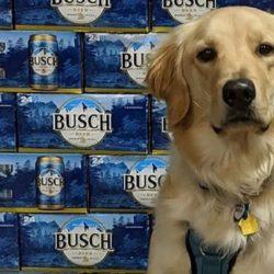 Foster a Dog, Get Busch: cervejaria deu cerveja de graça para quem adotasse um cachorro durante a quarentena