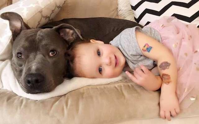 Amor de cao e gato pitbull convence mae humana a adotar gatinho e faz sucesso na Internet 1