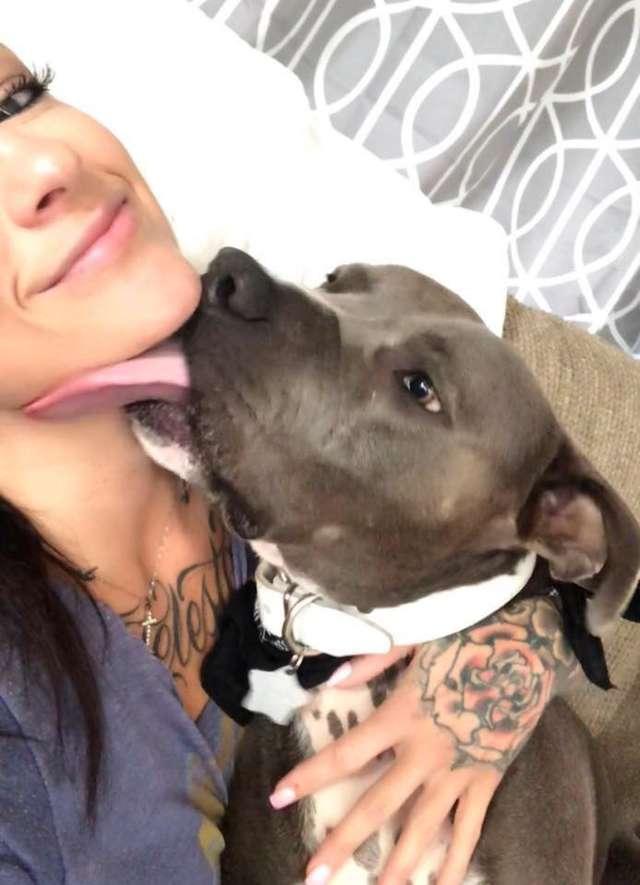 Amor de cao e gato pitbull convence mae humana a adotar gatinho e faz sucesso na Internet 2