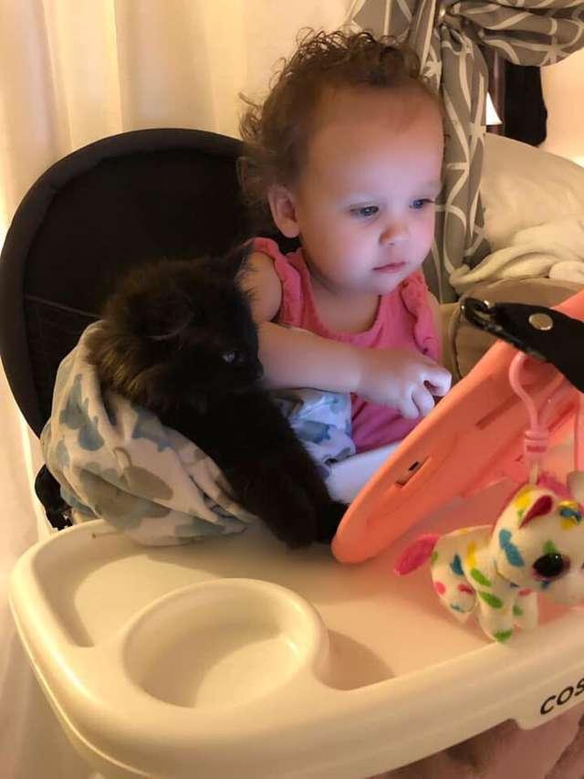 Amor de cao e gato pitbull convence mae humana a adotar gatinho e faz sucesso na Internet 5