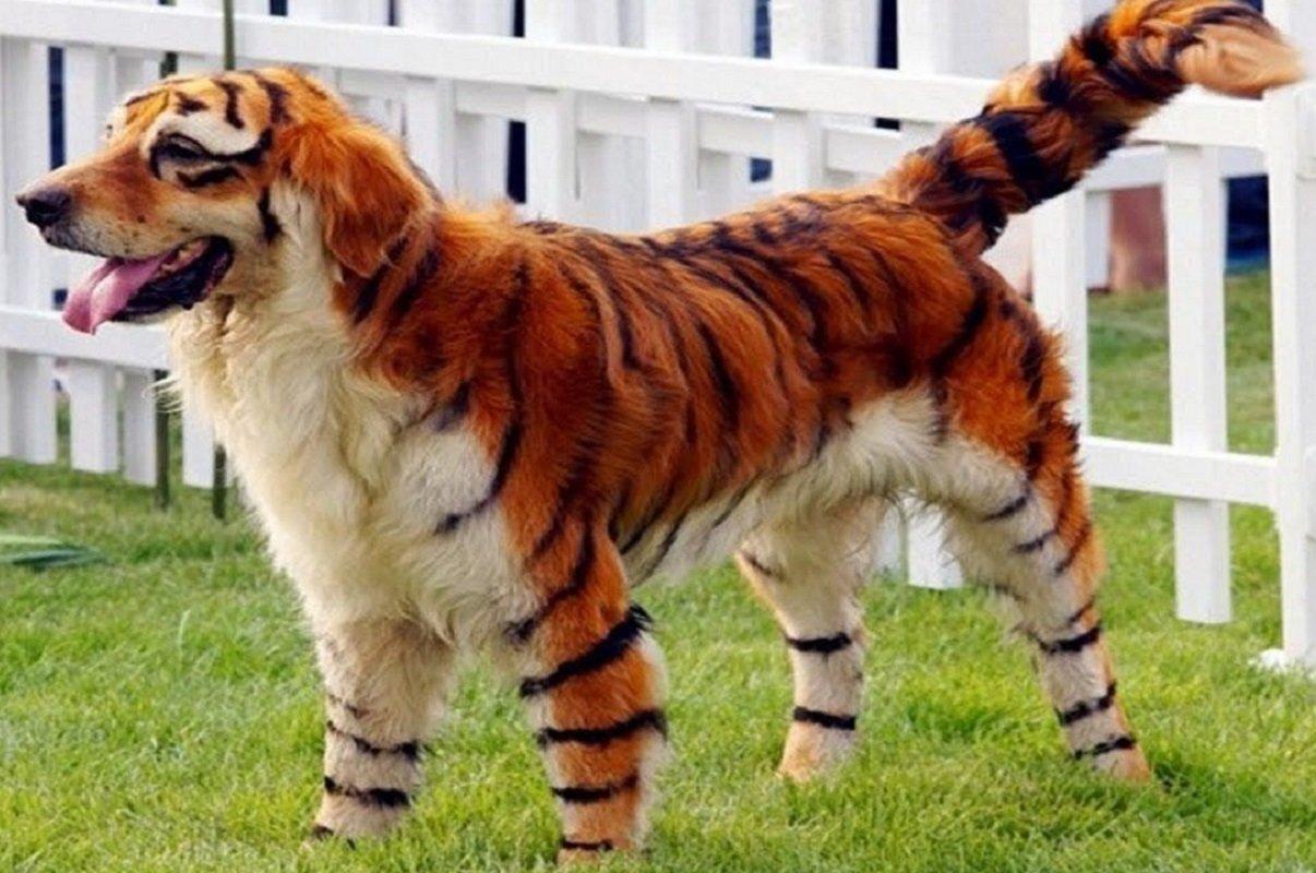Animais excêntricos desenhados de forma única e sem photoshop!