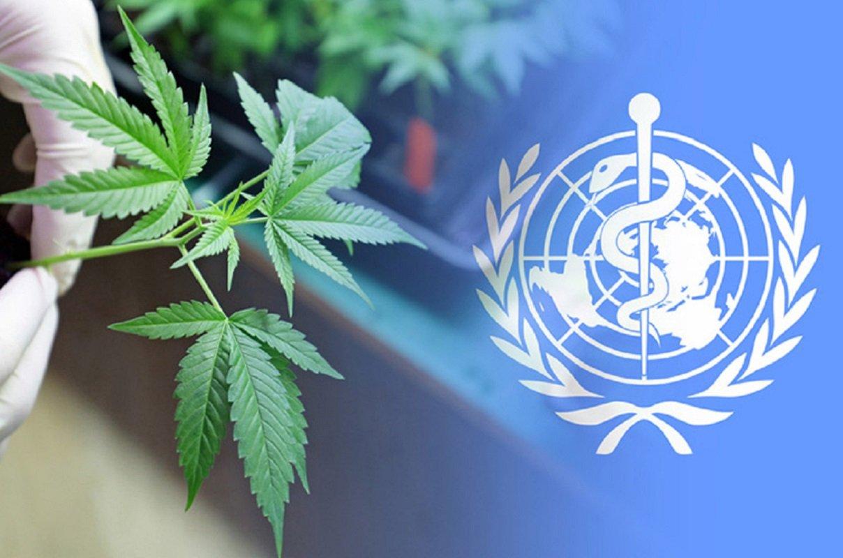 """GOOD MARIJUANA NEWS: Organização Mundial da Saúde (OMS) remove cannabis da lista de """"drogas"""""""