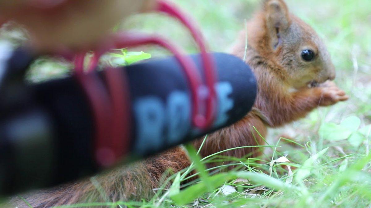 O som de um bebe esquilo comendo