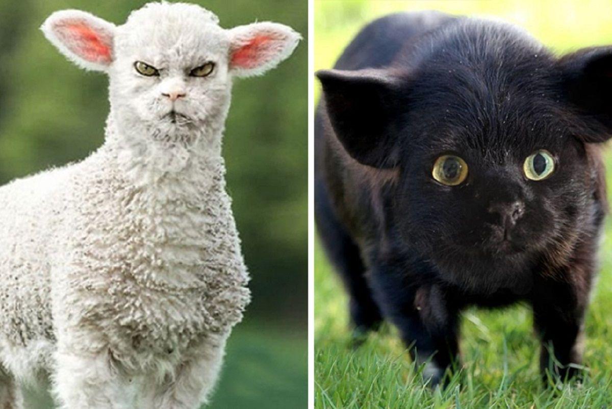 Animais com cara de gato Koty Vezde cria montagens super engracadas