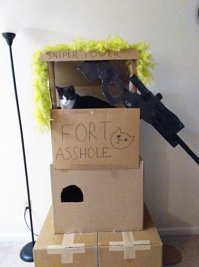 Donos de gatos estao criando fortes de papelao para seus animais 10