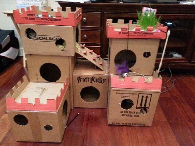 Donos de gatos estao criando fortes de papelao para seus animais 11