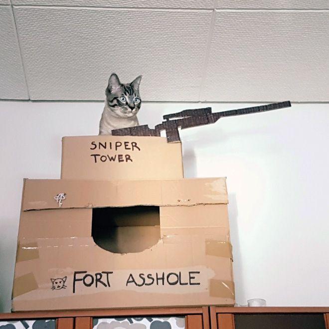 Donos de gatos estao criando fortes de papelao para seus animais 12