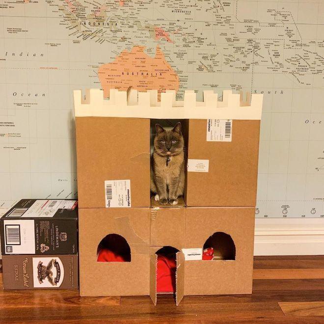 Donos de gatos estao criando fortes de papelao para seus animais 14