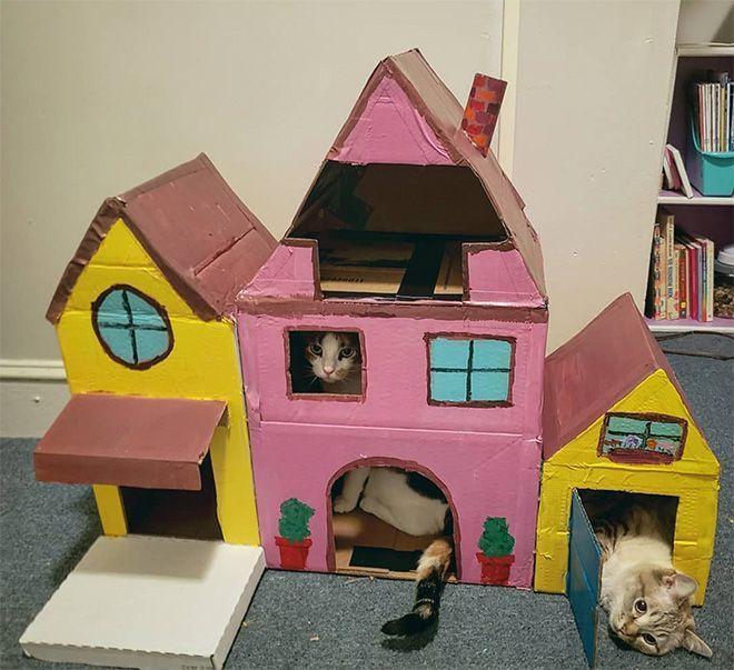 Donos de gatos estao criando fortes de papelao para seus animais 15