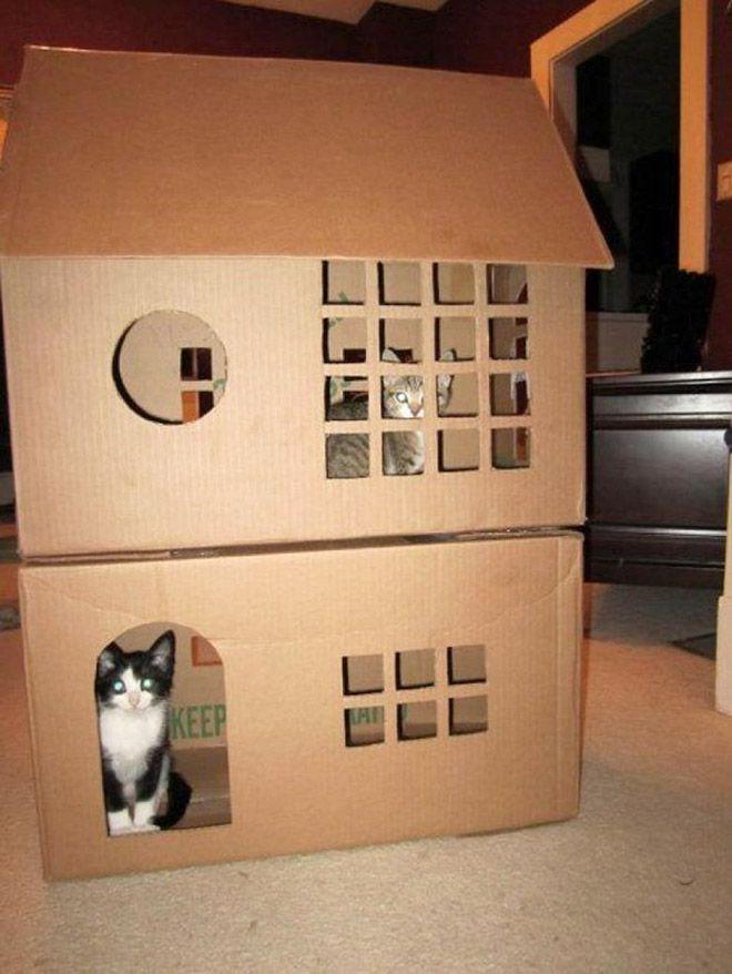Donos de gatos estao criando fortes de papelao para seus animais 17