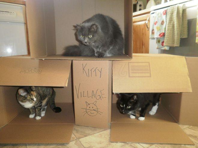 Donos de gatos estao criando fortes de papelao para seus animais 18