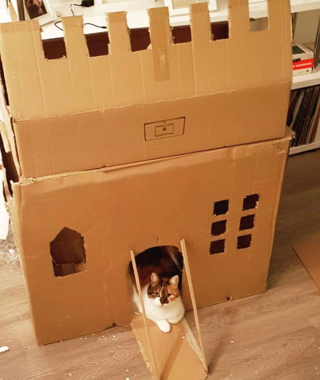 Donos de gatos estao criando fortes de papelao para seus animais 19