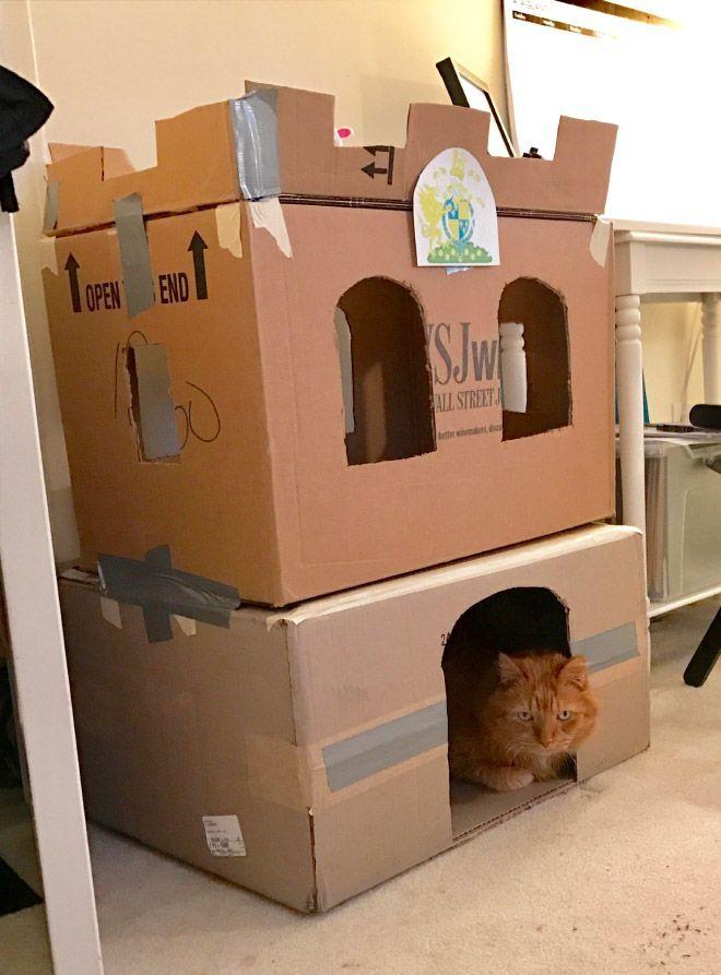 Donos de gatos estao criando fortes de papelao para seus animais 2