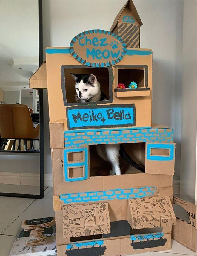 Donos de gatos estao criando fortes de papelao para seus animais 20