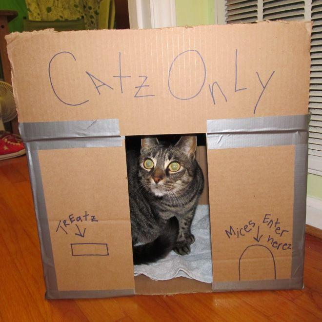 Donos de gatos estao criando fortes de papelao para seus animais 21