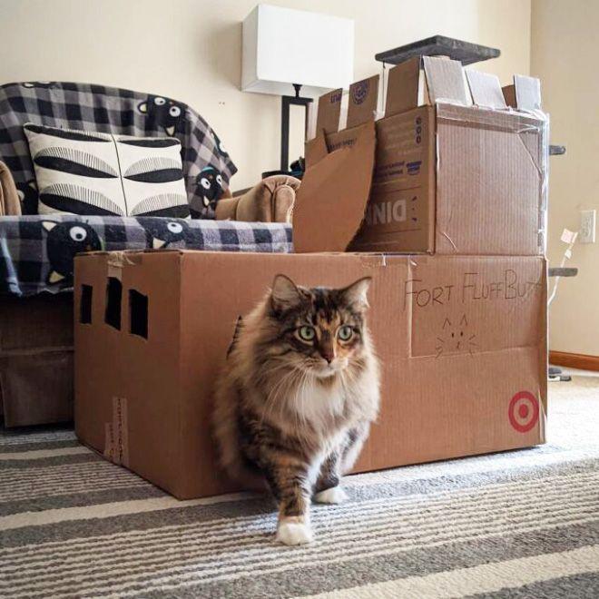 Donos de gatos estao criando fortes de papelao para seus animais 22