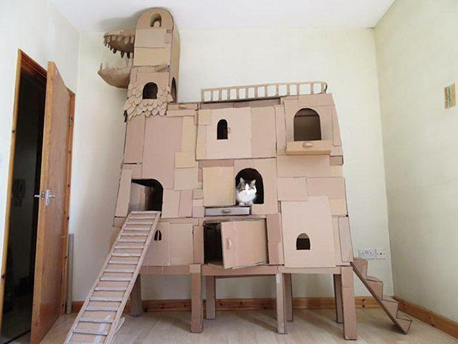 Donos de gatos estao criando fortes de papelao para seus animais 3