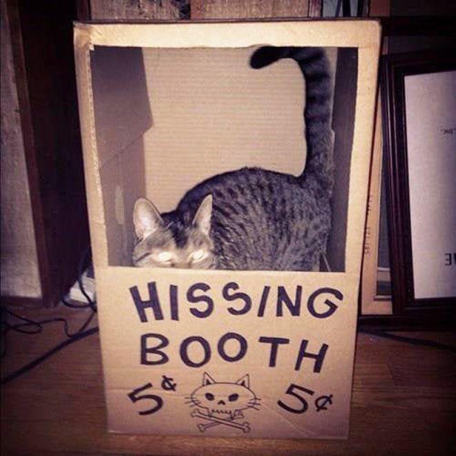 Donos de gatos estao criando fortes de papelao para seus animais 4