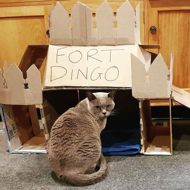 Donos de gatos estao criando fortes de papelao para seus animais 5