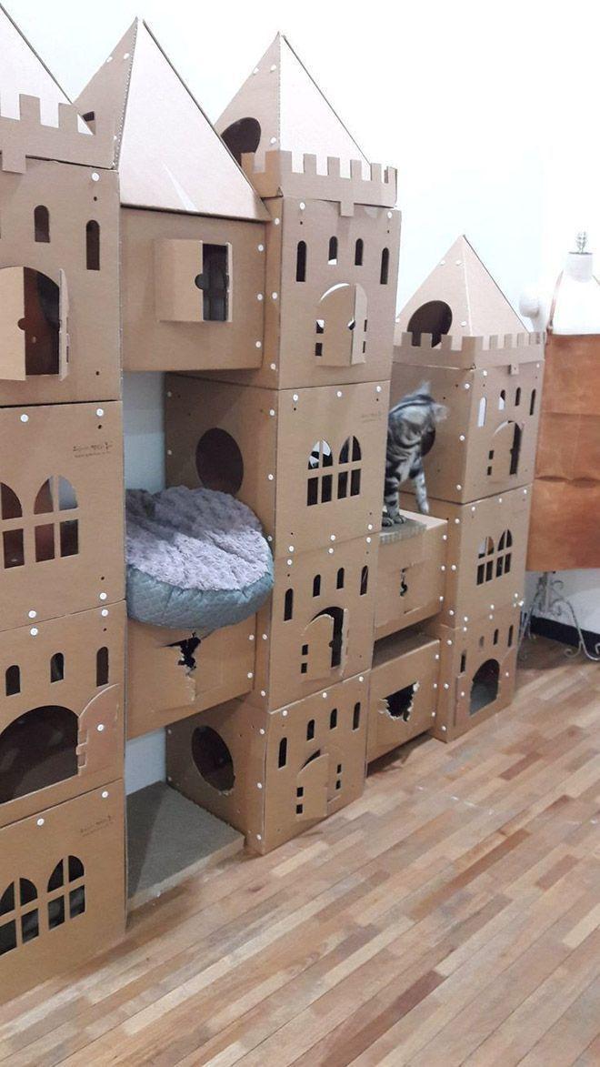 Donos de gatos estao criando fortes de papelao para seus animais 6