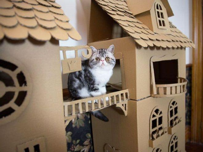 Donos de gatos estão criando fortes de papelão para seus animais
